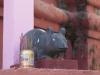 Jeden z lokalnych duchów w postaci - chyba - szczurzej (duchu, no offence ment).