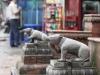 Kathmandu, Swayambhu, szczury pilnujące wejścia do świątyni.