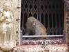 Kathmandu, Swayambhu, małpie rozrabiactwa.