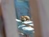 Niezbędnym wyposażeniem każdej stoczni jest kot!